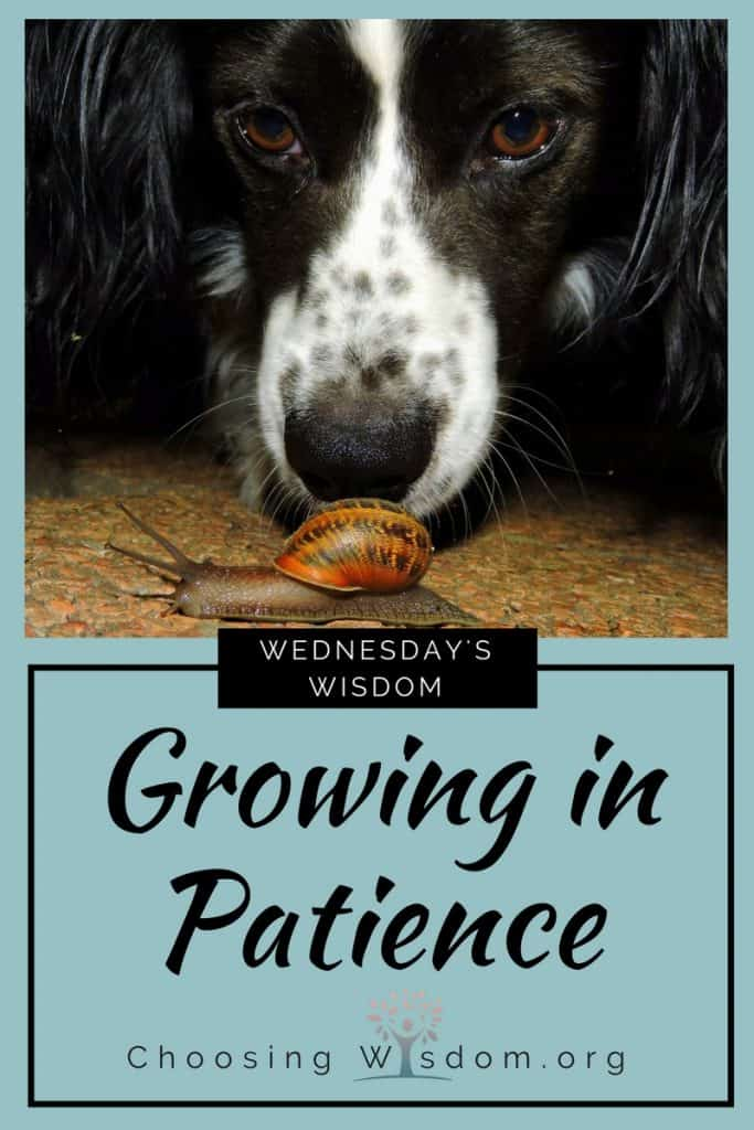 Growing in Patience - Choosing Wisdom