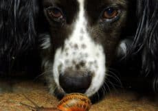 Dog waiting on Snail
